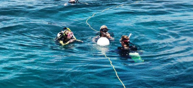 PADI Open Water Certification | Book Online | Key West Scuba Diving